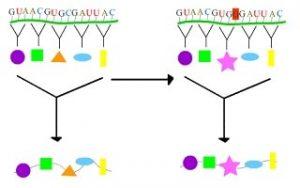 type of genetic mutation: Amino acid mutation
