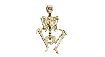 Number of bones