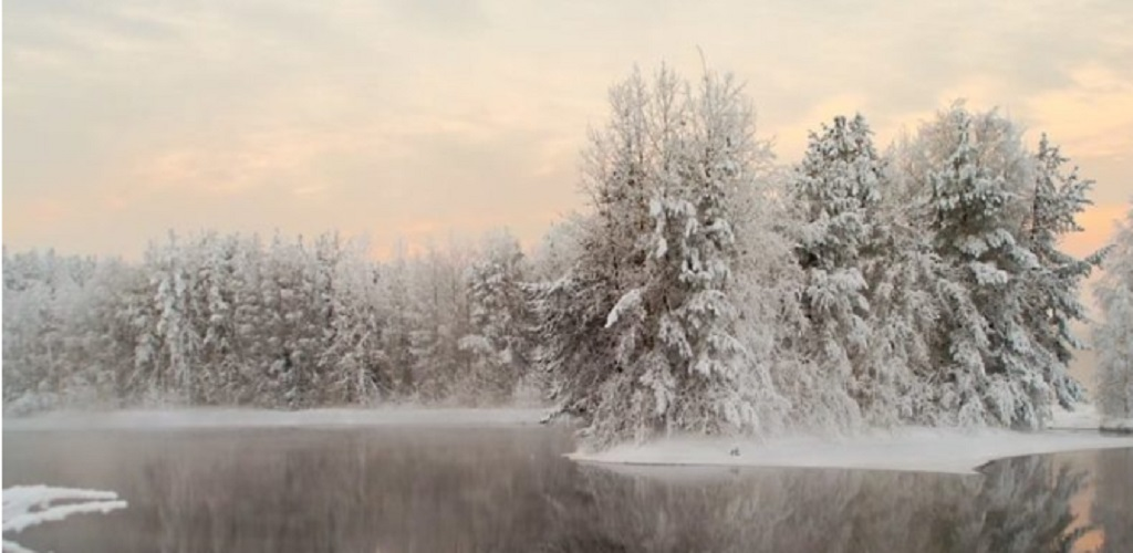 taiga biome forest weather winter snow ice