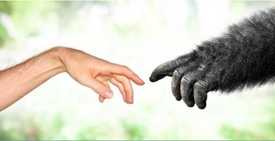 Darwin's theory natural selection origin of species evolution