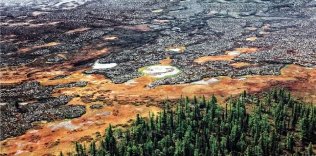 taiga biome forest tundra