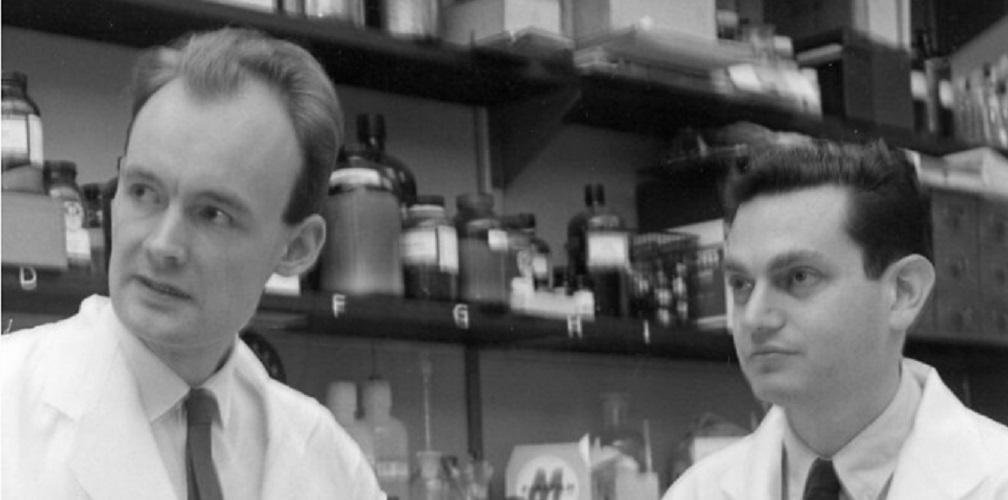 genetic code history Marshall warren nirenberg and heinrich matthaei