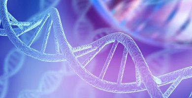 Bioethics - DNA