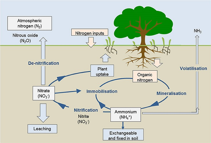 cycle of nitrogen