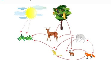 food trophic chain-ecosystem