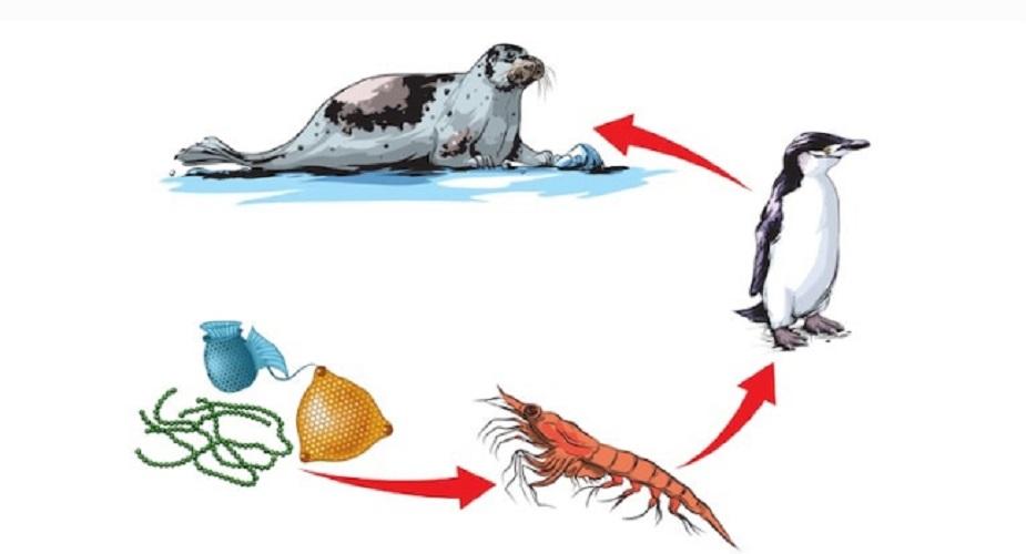 aquatic food-ecosystem trophic chain