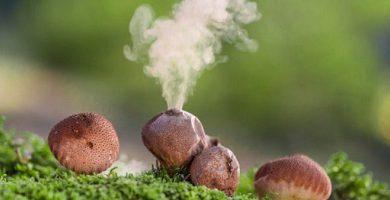 sporulation fungal spores