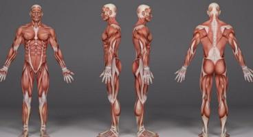 Physiology - Human body