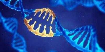 DNA genetic genes