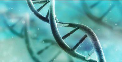 Genotype - DNA - metabolism