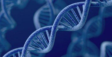 DNA- Inheritance - genes