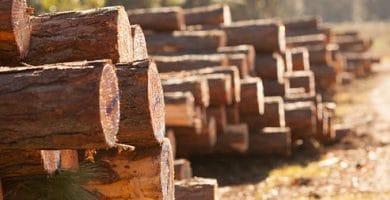 Organic matter - wood