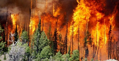 natural disasters - forest fires