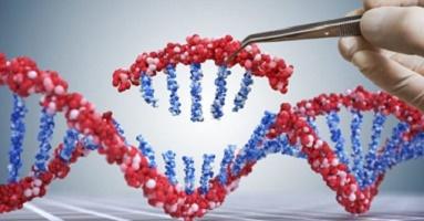 genetically modified organisms ogm adn genetic engineering