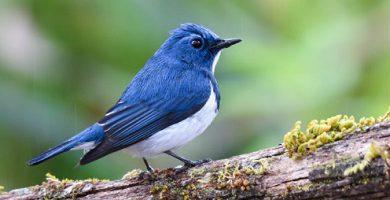 Organism - bird - animal kingdom