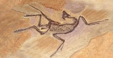 archeopteryx paleontology