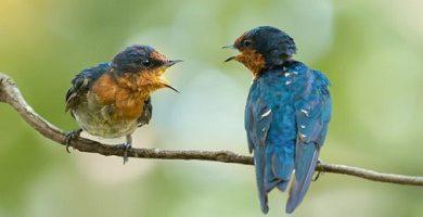 animal communication process