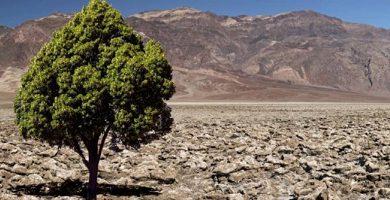 desert tree paradox
