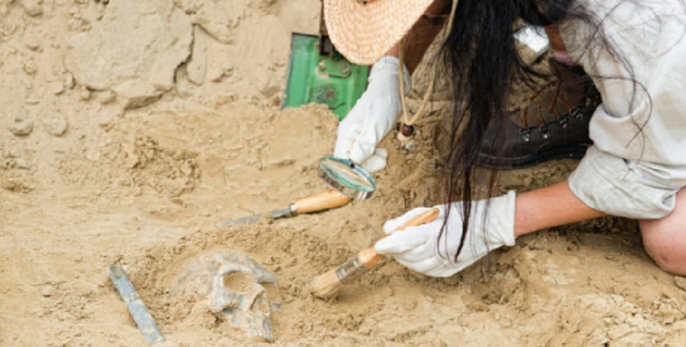 Archeology - Social Sciences