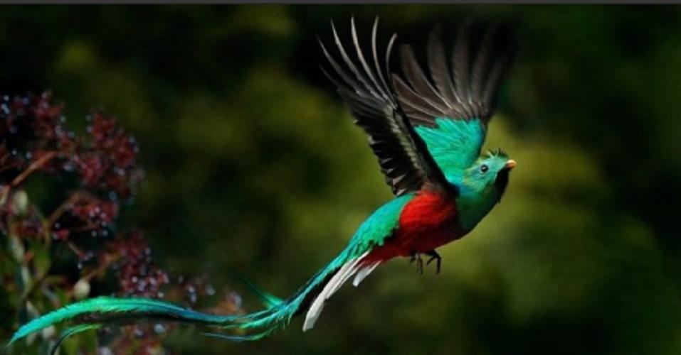 deforestation consequences biodiversity quetzal