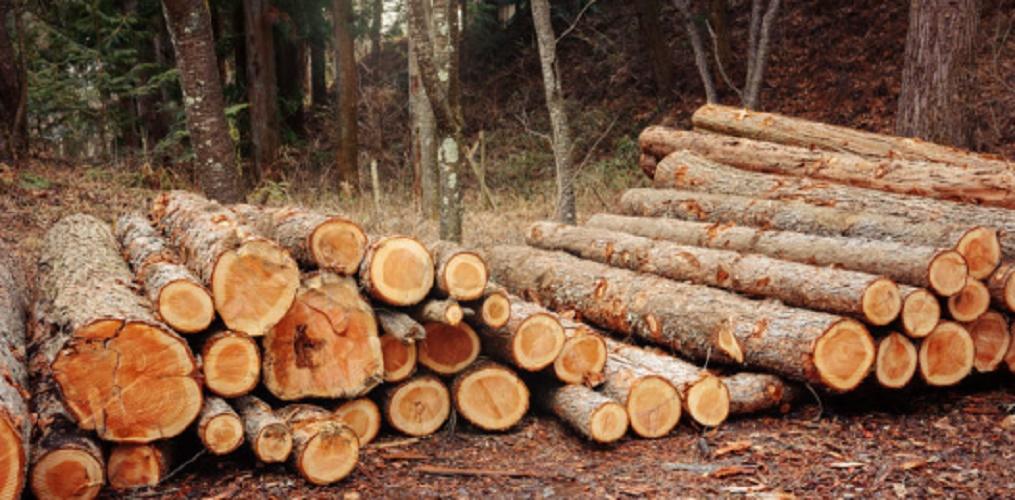 Alternative fuels - afforestation