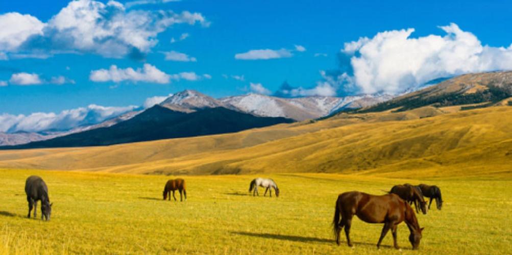 Steppe - wildlife - horse