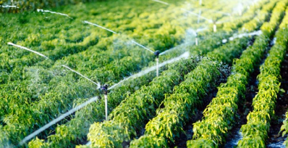 Efficiency - Irrigation System