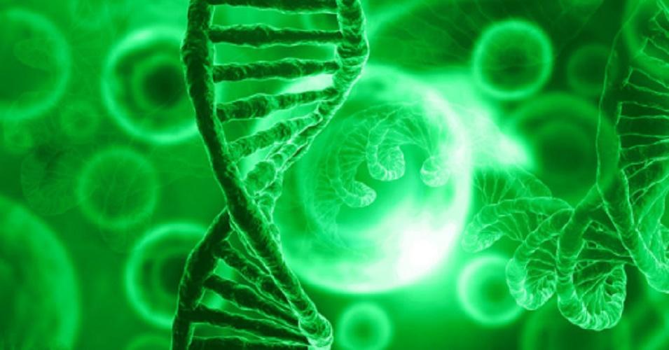 DNA - phenotype - genotype