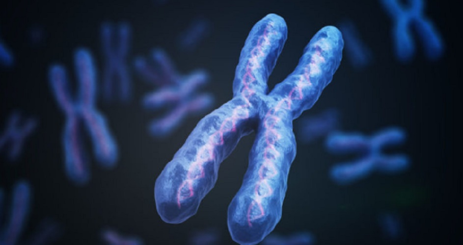 Cells - chromosome - genetics