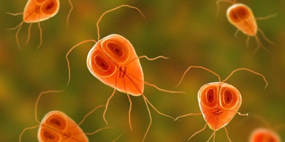 Irritability - Cell - unicellular organism