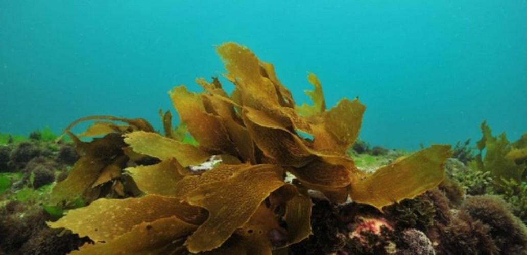 algae producing organisms