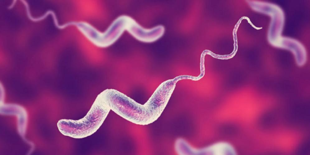 Bacteria - unicellular organisms