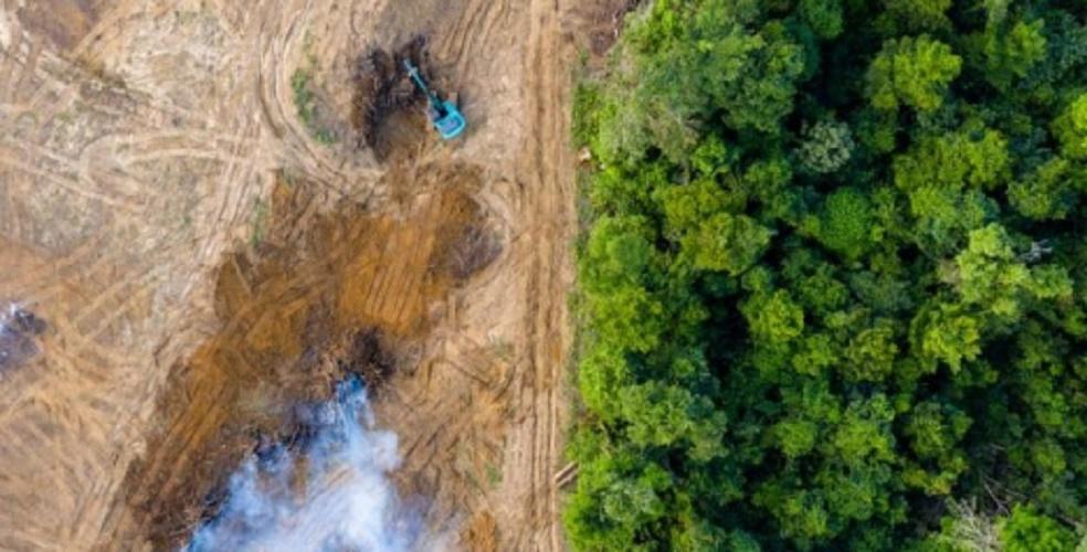 environmental problems deforestation