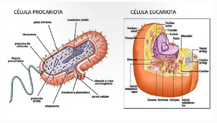eukaryotic and prokaryotic cells