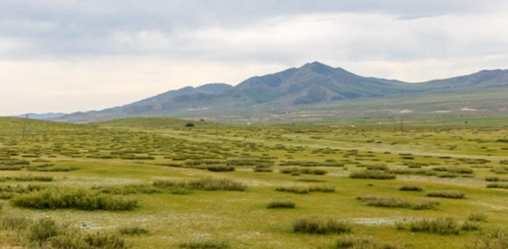 Steppe - flora