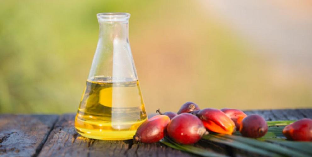 Alternative fuels - biodiesel