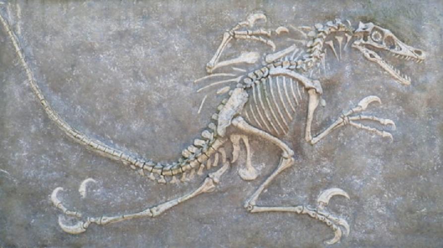 geology biology paleontology dinosaur fossil