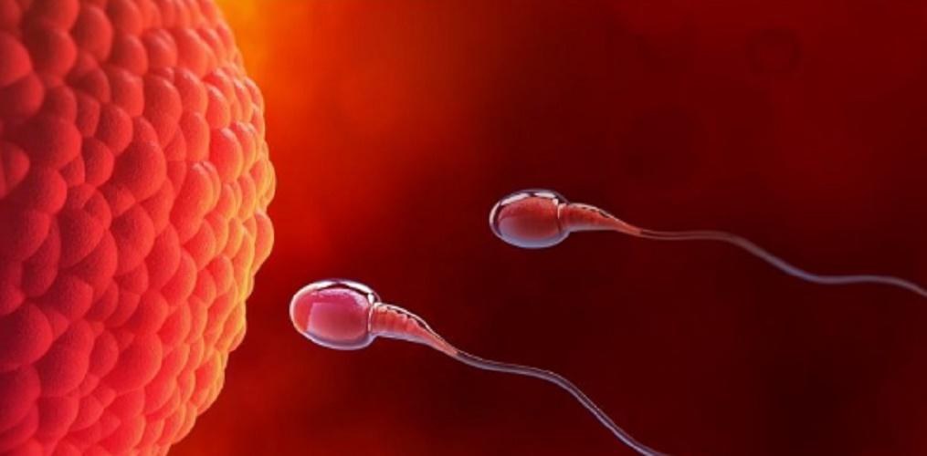 meiosis