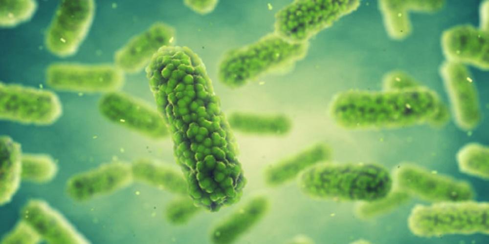 Decomposing organisms - bacteria