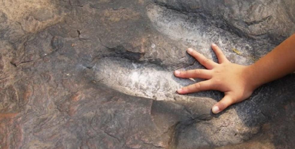 fossil footprints paleontology