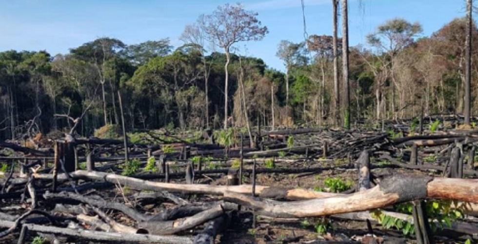 deforestation amazonas brasil 2019 fire