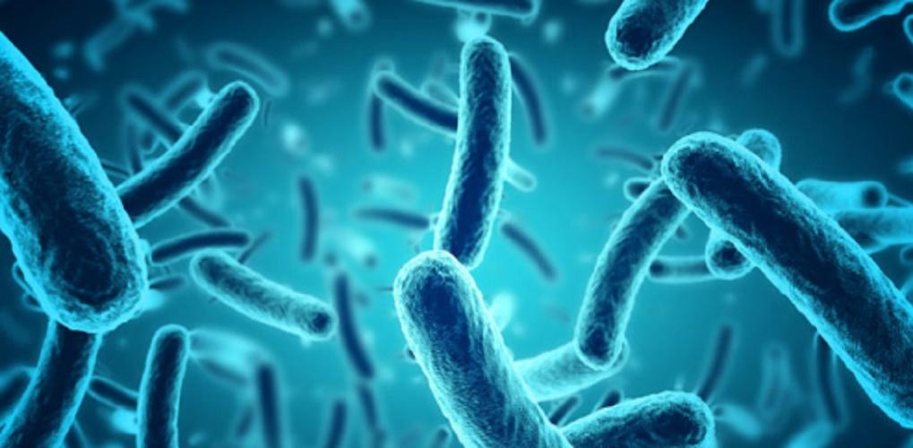 Archaea domain