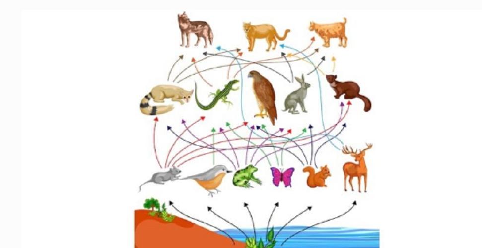 trophic food network ecosystem