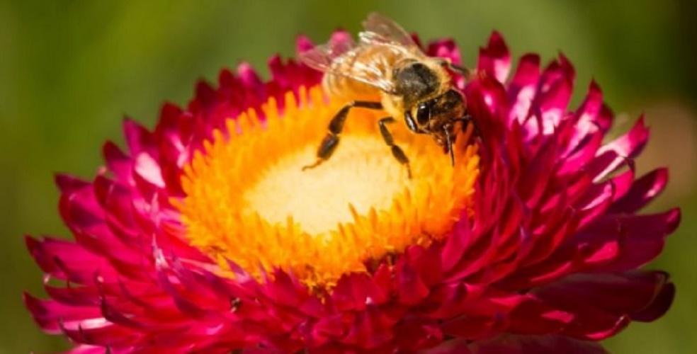 individual biology community bee mutualism