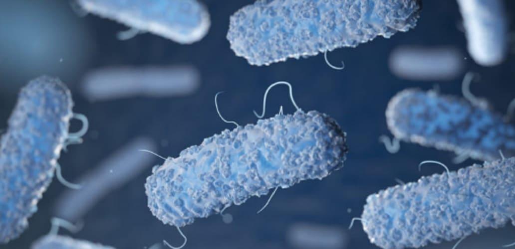 Escherichia coli - microorganisms - microbes