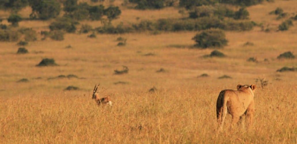 Predation - predator - mutualism