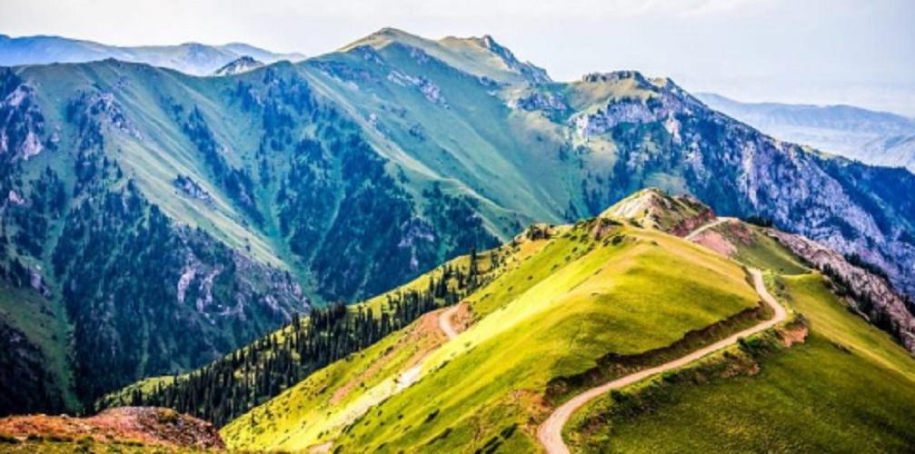 Mountain-vegetation