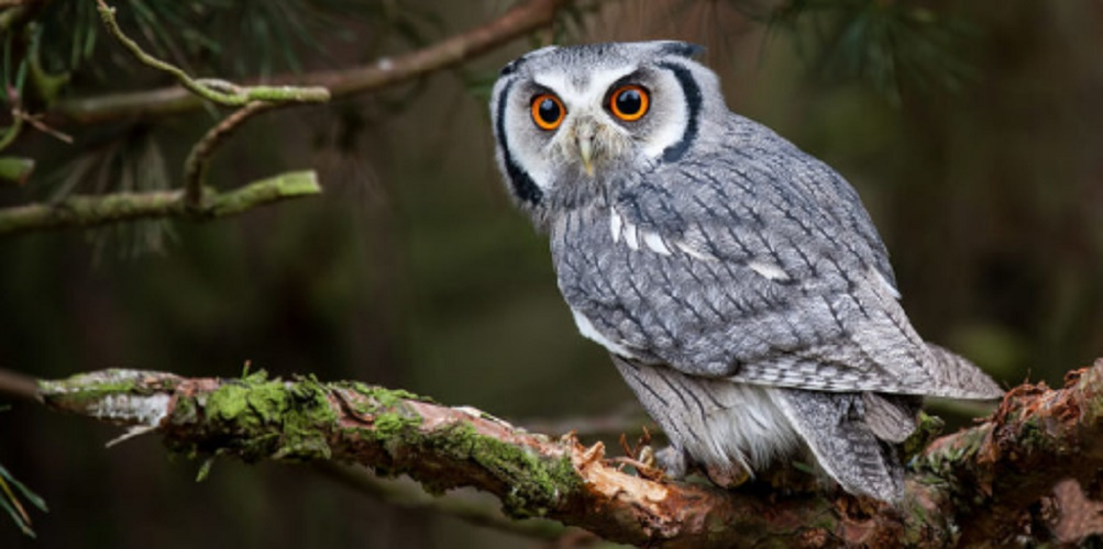Tertiary consumers - owl