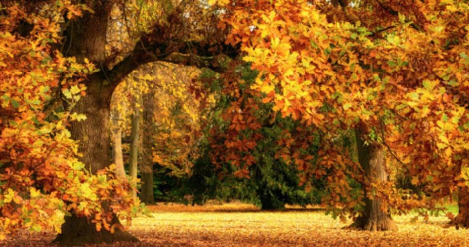 Multicellular organisms - trees in autumn