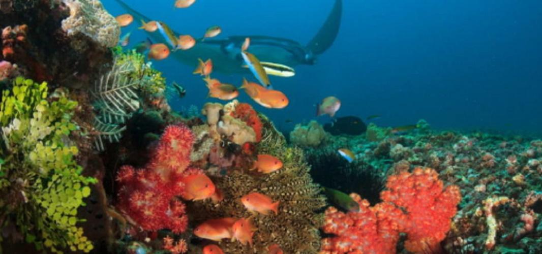 Komodo Coral Reef National Park